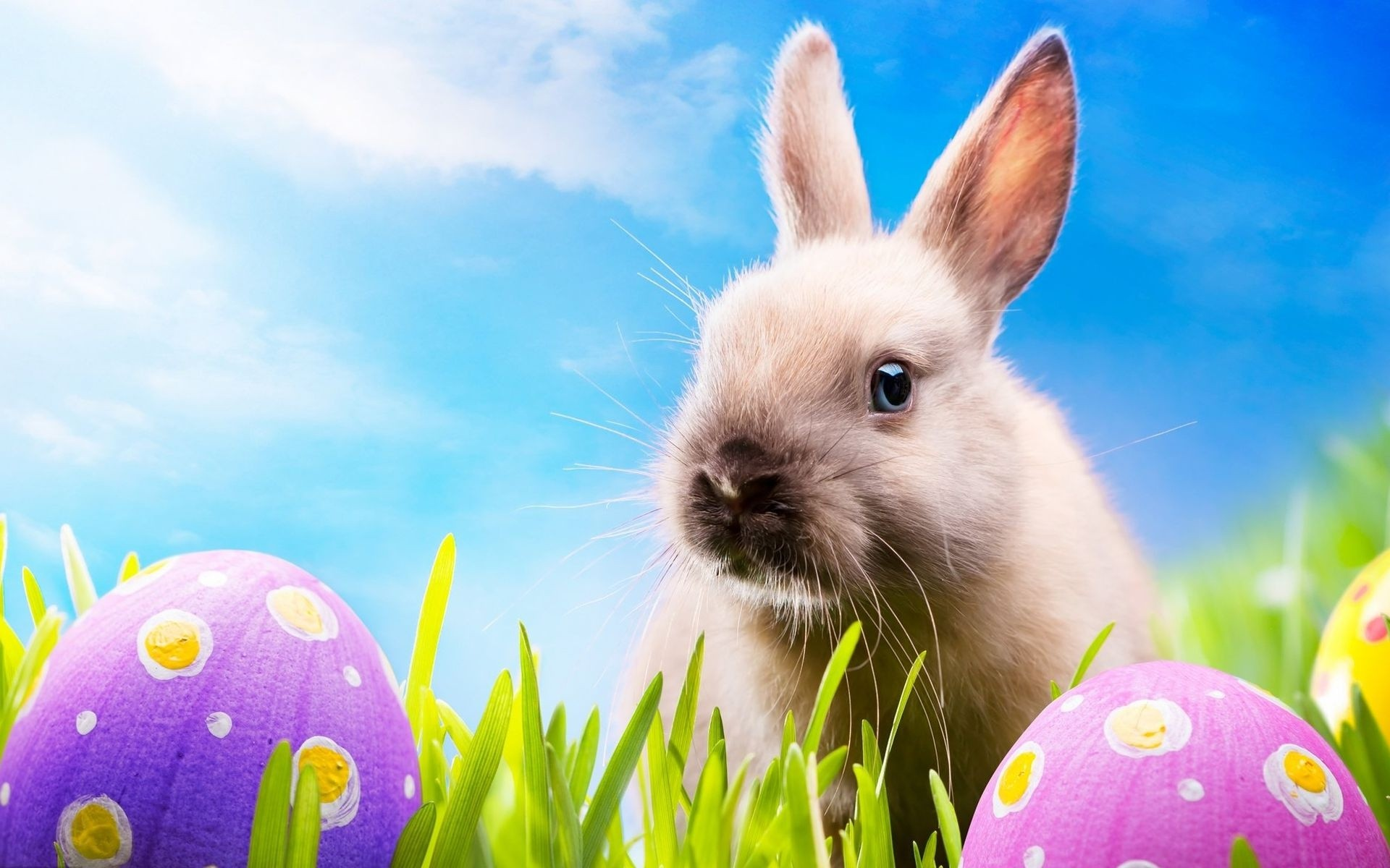 What's up with Easter Bunnies, Eggs, & Candy? - Scranberry Coop - Vintage Store - Antiques, Collectibles, & More