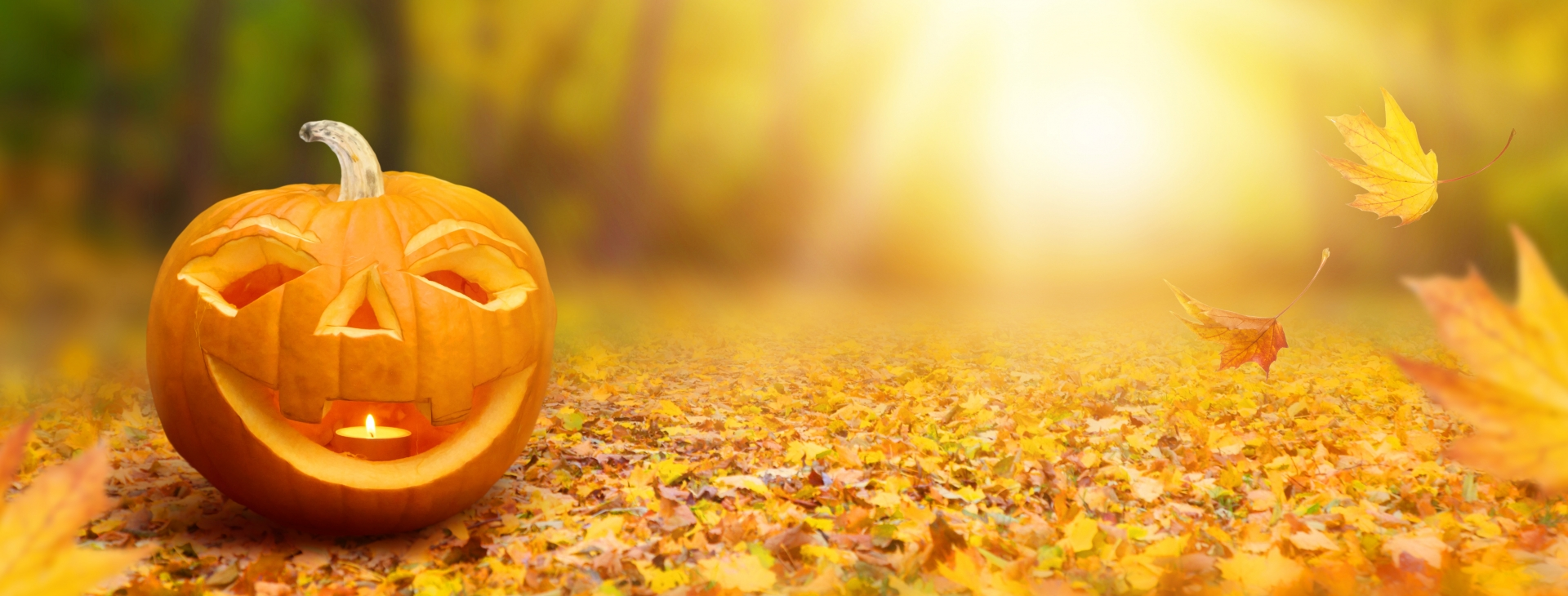 The Magic of Halloween, Autumn, & Change